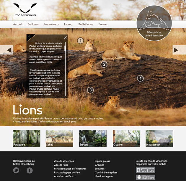 zoo-page-lion